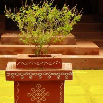The genetics and history of the Indian Tulsi