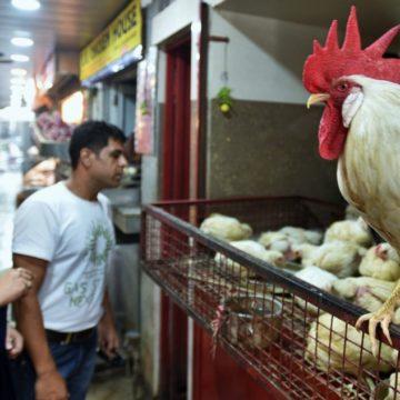 Halal versus Jhatka: A scientific review