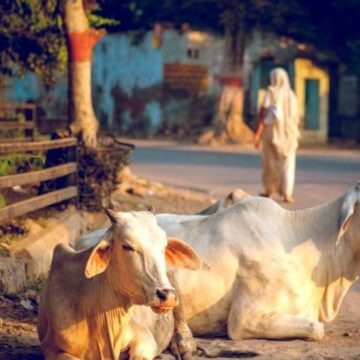 History of cow protection in India